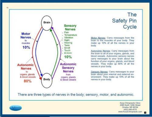 Brain Body Cycle